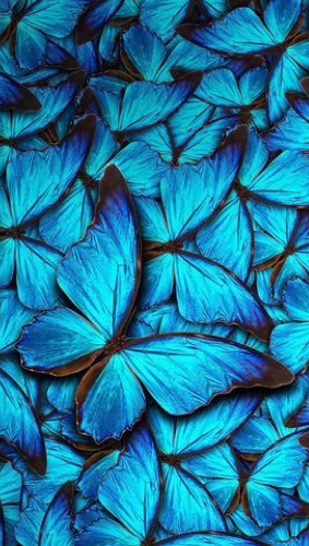 Mavi Telefon Wallpaper