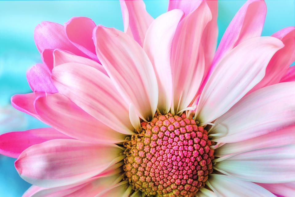 Çiçek Aşkına
