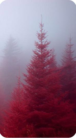 Kırmızı Duvar Kağıdı 8