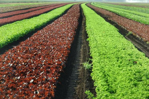 Organik Bakım Nedir Organik Bakım Nasıl Yapılır
